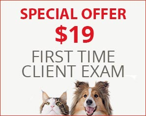 Special Offer. $19 First Time Client Exams!